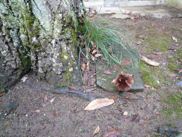 栗の木の下